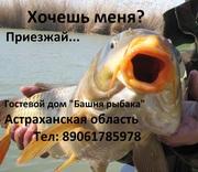 Эконом рыбалка и туры выходного дня в Астрахани