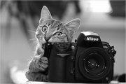 Обучение в фотошколе Новочеркасска