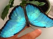 Тропические Живые Бабочки изИндонезии